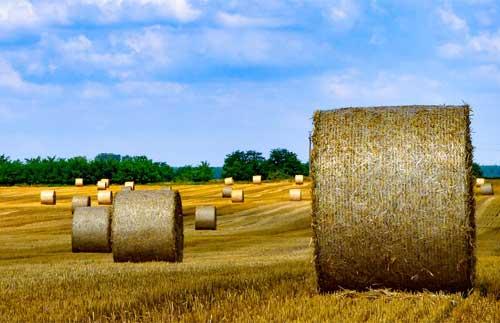 poljoprivrednim gazdinstvima